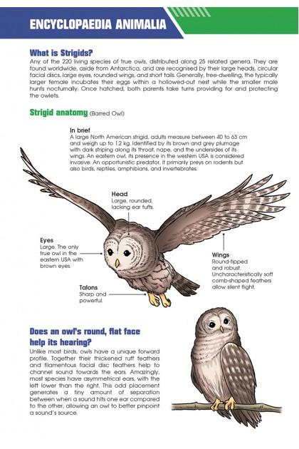 X-VENTURE Primal Power III 02: Wildlife Warfare: True Owls ‧ New World Porcupines